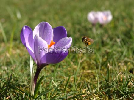 spring messengers