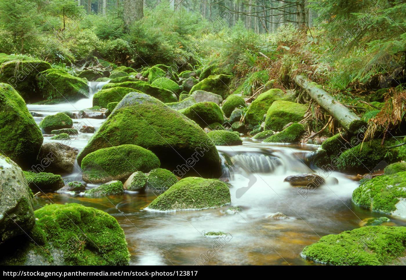 wild, creek, in, the, northern, black - 123817