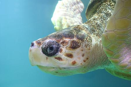turtle, 02 - 126653