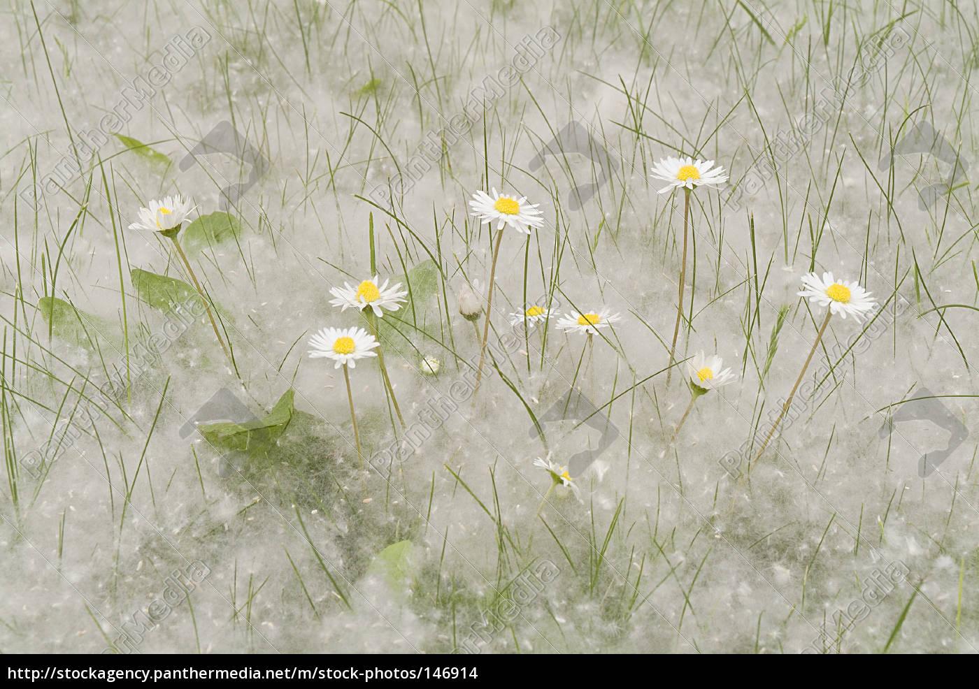 spring - 146914