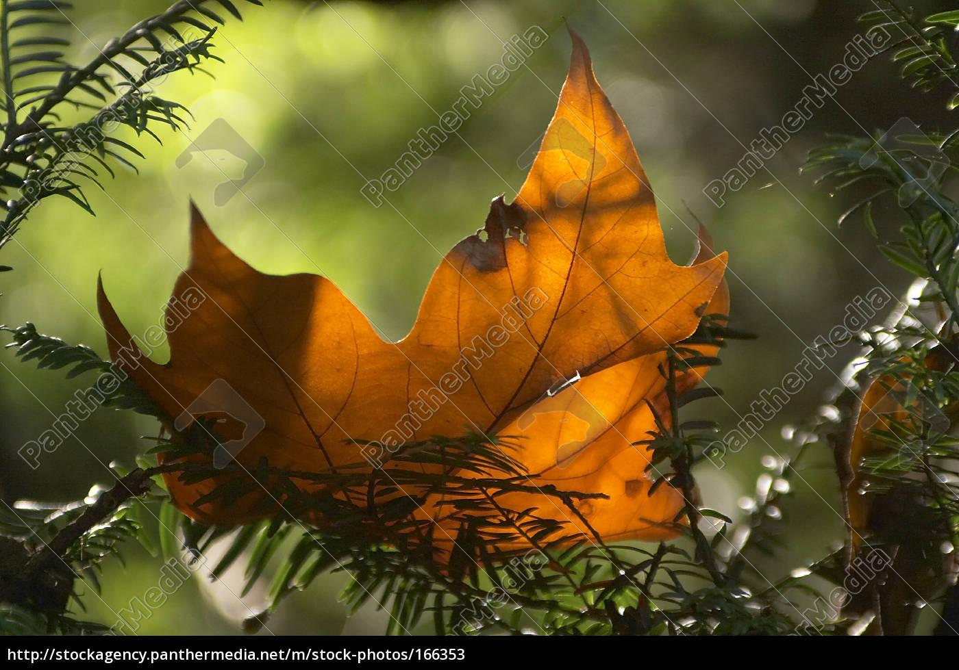 autumn, still, life, ... - 166353