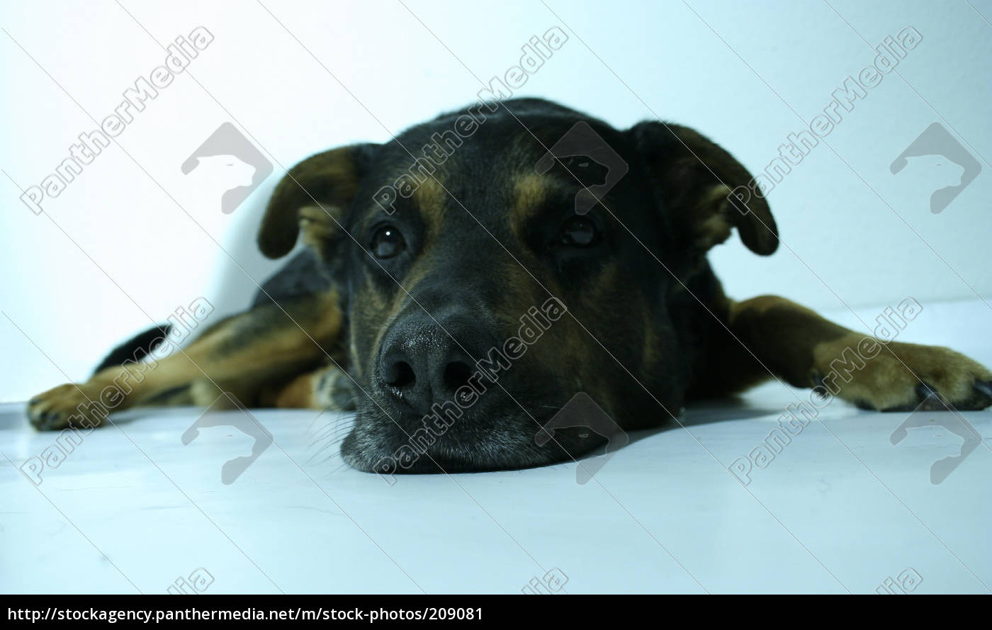 who, let, the, dog, out - 209081