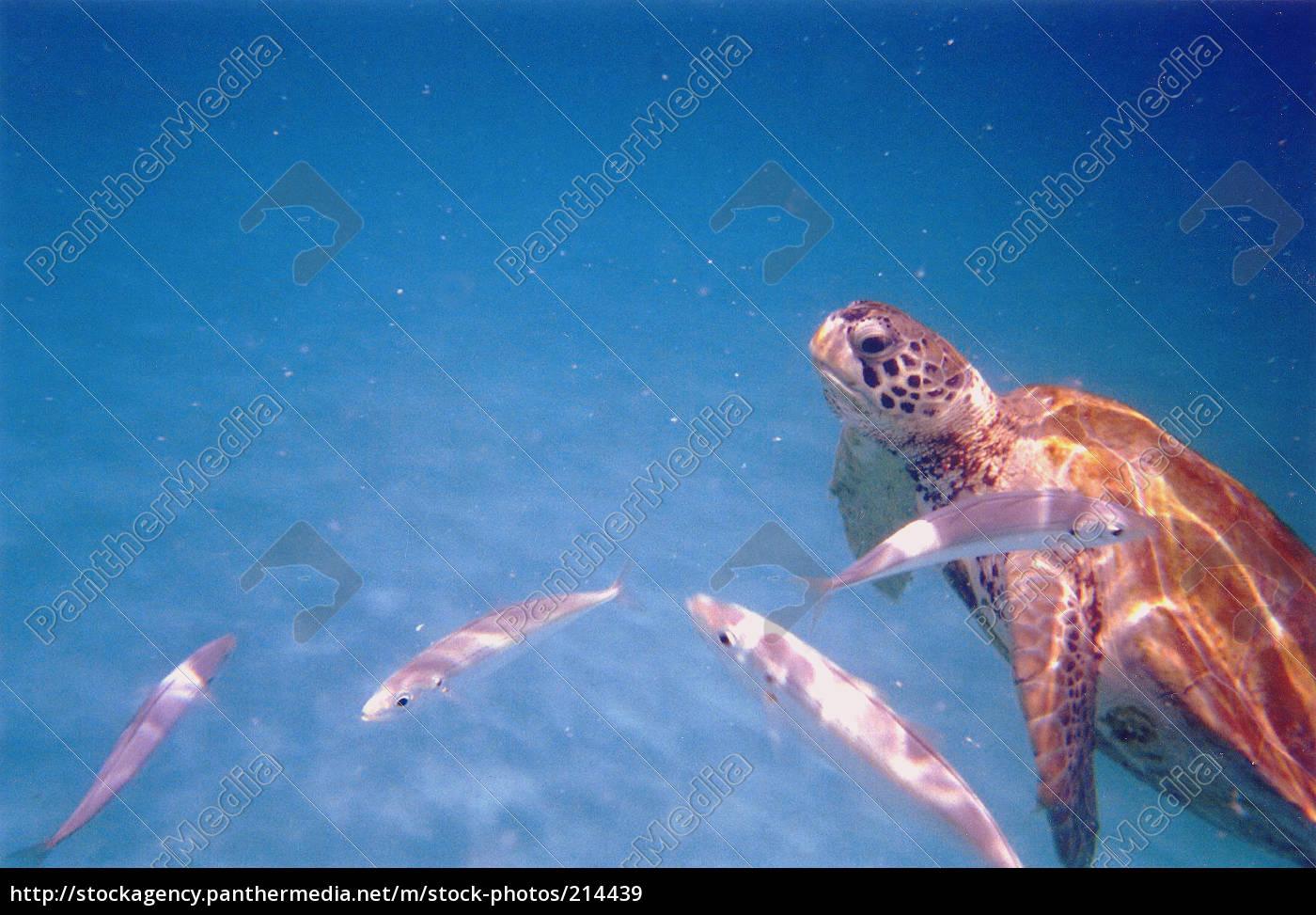 sea, \u200b\u200bturtle - 214439