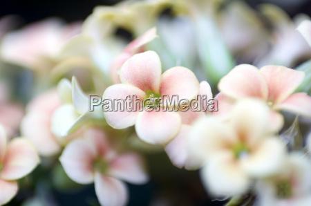 flower, -, 4 - 242610