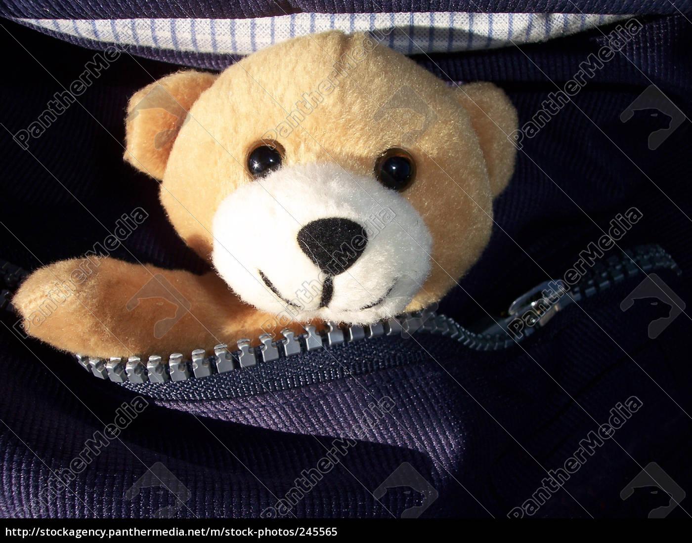 teddy, bear - 245565