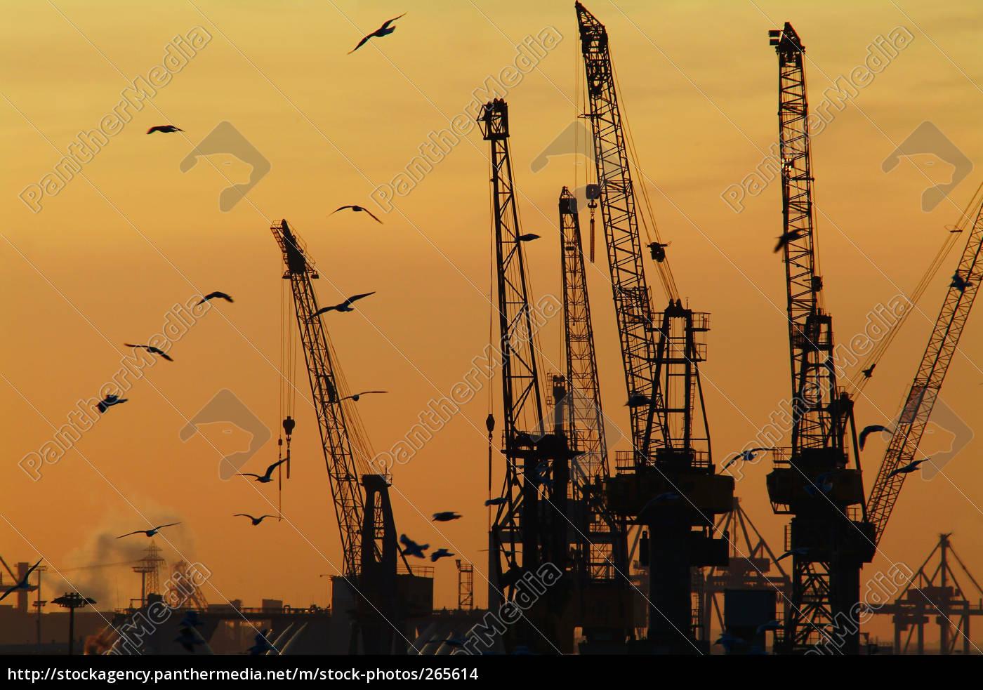 cranes - 265614