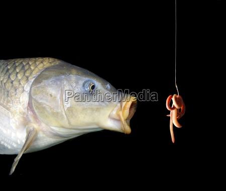 the, bait - 266286
