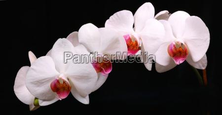 orchidaceae, (18) - 272945