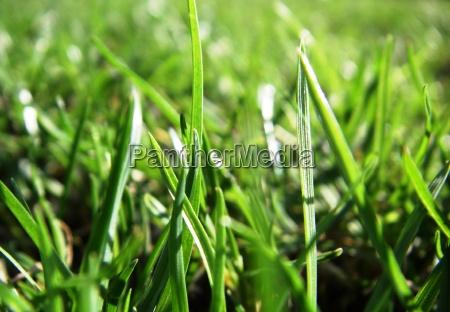 grass green no 1