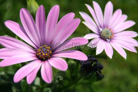 flower - 317184