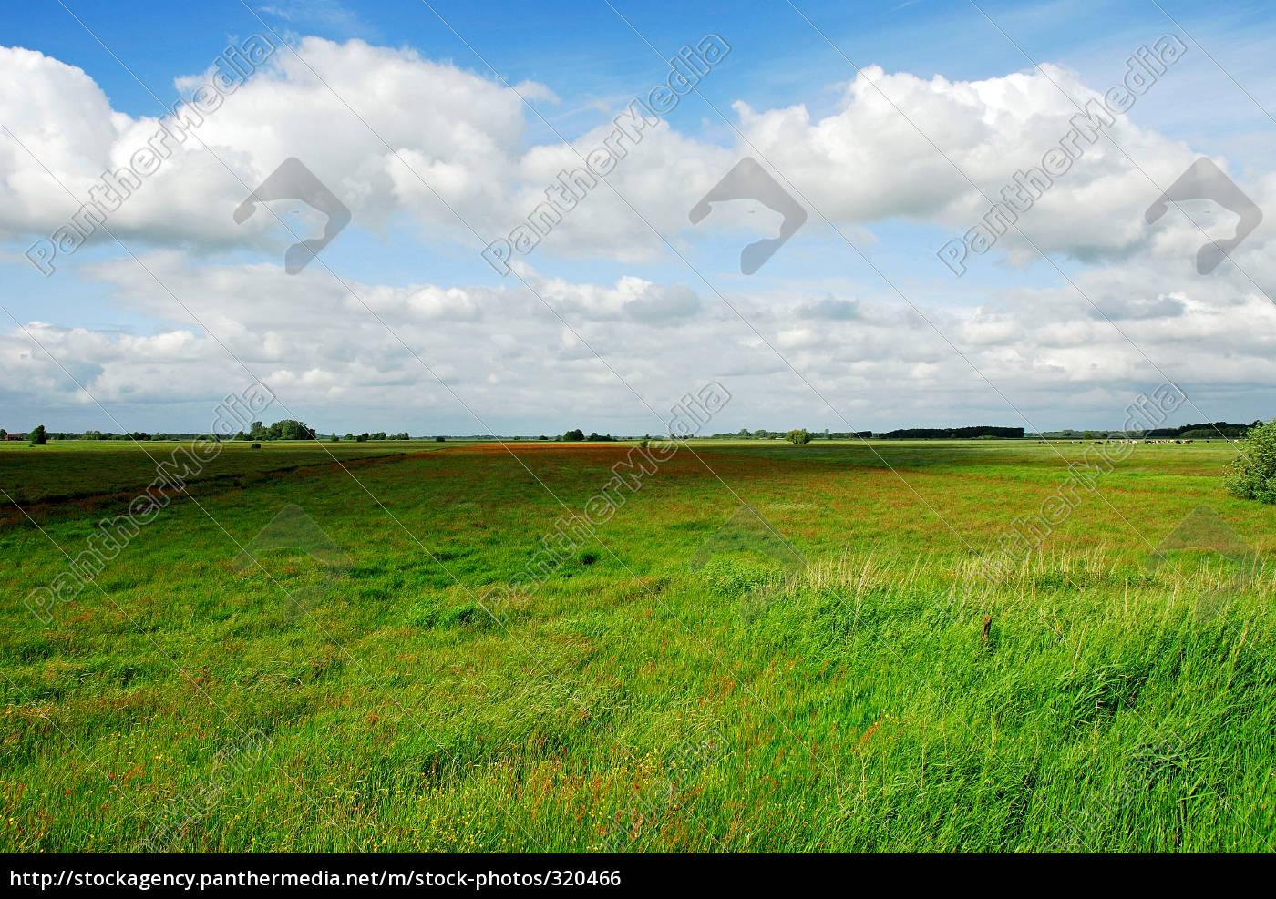 meadow - 320466