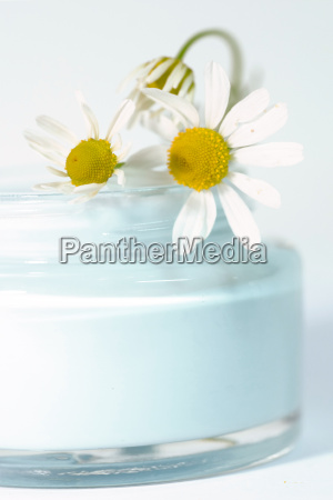 chamomile, cream - 324511