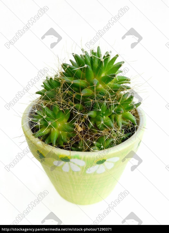 cactus - 1290371