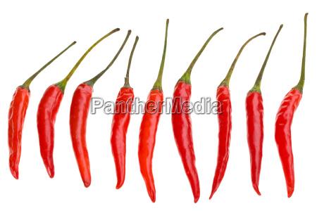 reihe von peperoni auf weiss