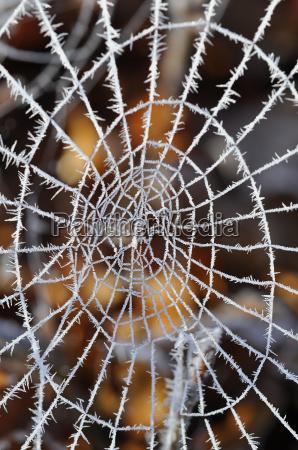 spinnennetz mit raureif