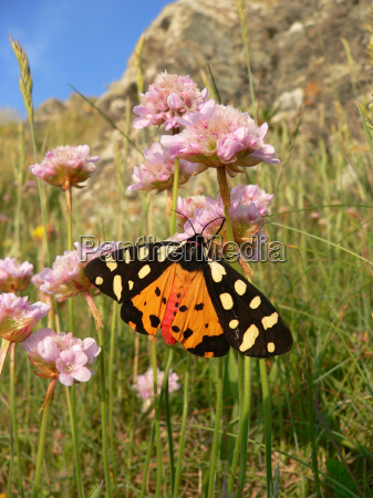 protected sheltered rare moth exstinction butterfly