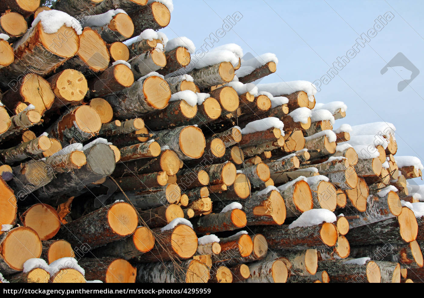 pile, of, wooden, logs, in, winter - 4295959