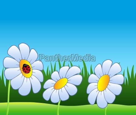 three daisies and ladybug