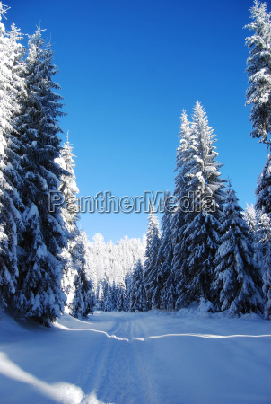 snowy, mountain, forest - 5017617