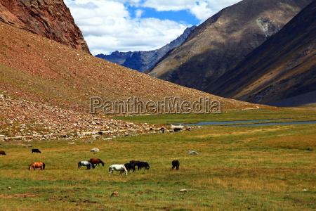 tibet india mountain himalayas hochmoor zanskar