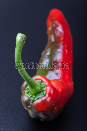 closeup von einer roten peperoni