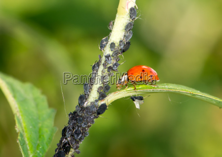 biological pest control