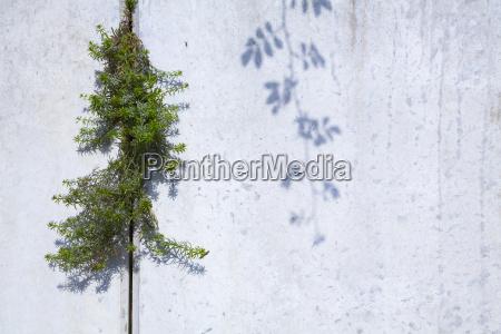 green concrete wall facade masonry column