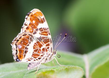 map butterfly