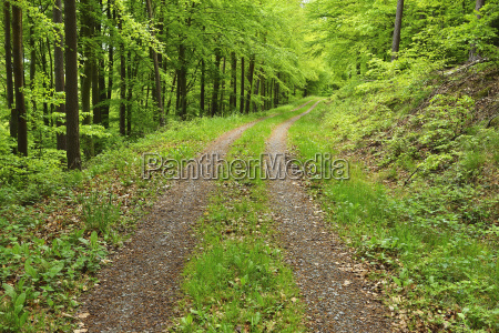 tire tracks through forest in spring
