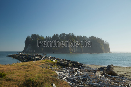 coastal view with dead fallen trees
