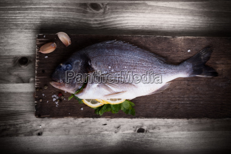 sea bream fish dorade