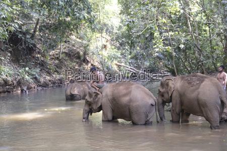 rescued elephants elephant sanctuary mondulkiri cambodia